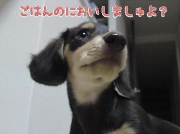 2009-09-11-1.jpg