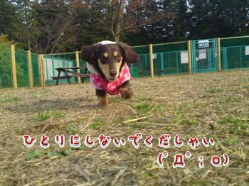 2009-11-27-1.jpg