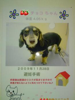 2009-11-29.jpg